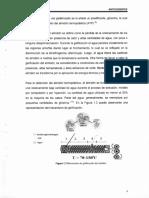 Zahida Sandoval Arellano maestria.pdf