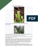 Origen y evolución del término.docx