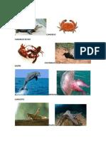 CAIMÁN, cangrejo, cocodrilo. delfin, cangrejo de rio,.docx