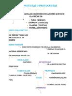 REINO PROTISTAS O PROTOCTISTAS.docx