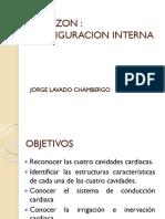 Configuración interna cardíaca
