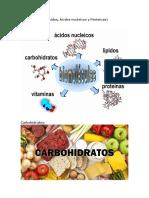 Carbohidratos lipidossssssssssssssssssss.docx