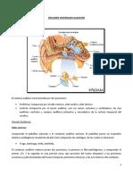 RESUMEN INTERNADO AUDICIÓN.docx