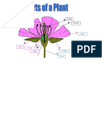 Plant Reproduction Exercise.docx