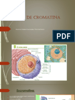 Tipos de cromatina,el cromosoma eucarionte.pptx