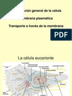 Biologia celular 1 Membrana plasmática.ppt