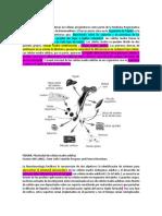 Células progenitoras.docx
