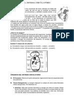 El Sistema Circulatorio Clase