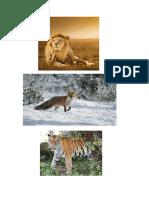 animaux.pdf