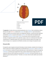 Caparazón (Tortuga) - Wikipedia, La Enciclopedia Libre