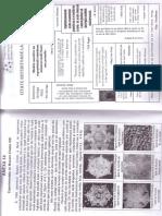Surdu01 Cortep Full Paper