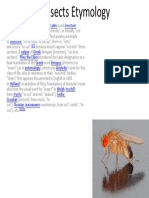Insects Etymology