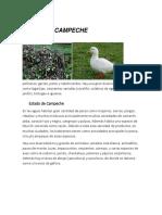 FAUNA DE CAMPECHE.docx