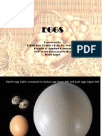 Chapter 4- Eggs