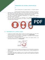 Embriologia - 1° semana(teoria).doc
