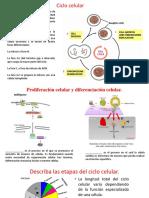 Cilco Celular y Cancer