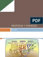 Unidad 3 Protistas y Hongos
