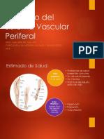 Estimado Del Sistema Periferovascular (1)