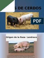 RAZAS DE CERDOS.pptx