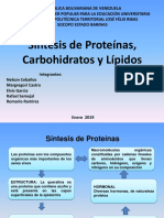 Síntesis Proteinas, Lipidos y Carbohidratos