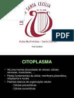 citoplasma_ppt