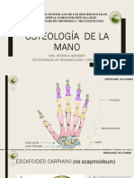 Osteologia de La Mano