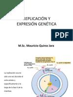 REPLICACIÓN Y EXPRESION GENETICA.pdf