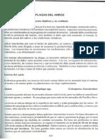 00276-plagasarrozaspectostecnicos.pdf