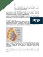 Anatomia Toraco Abdominal