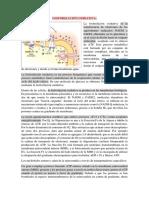 FOSFORILACIÓN OXIDATIVA.docx