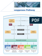 Cyclooxygenase Pathway