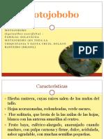 Motojobobo Frutas Tropicales  bolivia