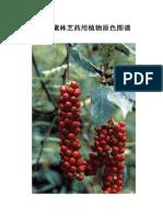 西藏林芝药用植物原色图谱