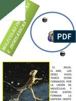 Ficha Celula PNM