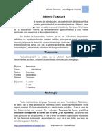 Genero toxocara, toxocariosis, larva Migrans Visceral