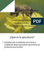 Proceso de Cultivo de Abejas y Producción De