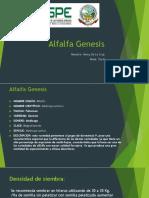 Alfalfa Genesis