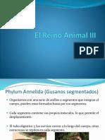 El Reino Animal III