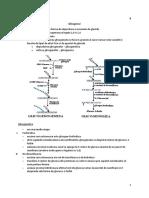 BC C8 Glicogenul.pdf