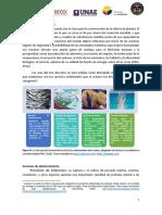 Beneficios y Usos Del Mar