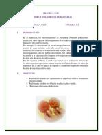 MICROBIOLOGIA Nº 05.docx