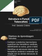 telencefalo estrutura