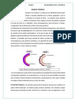 Tinciongran 150707154938 Lva1 App6892fundamento Teorico Coloracion