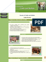 Breeds of cattle and buffalo.pdf
