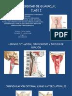 Anatomia 2... Clase 2.. Laringe y Traquea