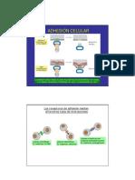 adhesioncelular