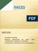 ADM 102 - Raices