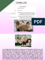 camellos-1227824518342005-8