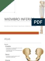 Anatomia Miembro Inferior Reg Glutea Uns 2019