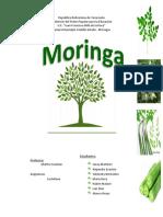 TRABAJO DE MORINGA II.docx